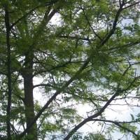 ¿Por qué los árboles atraen la lluvia?